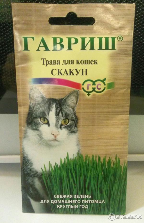 Трава для кошек: какую любят кошки, как сажать, цены