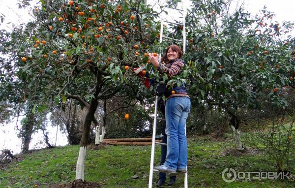новый афон абхазия отзывы об отдыхе 2019