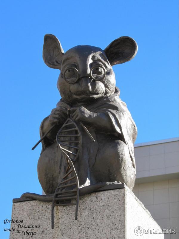 Мышь вяжет нить днк