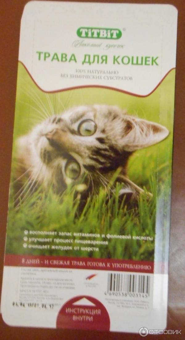Какую траву сажают для кошек 86