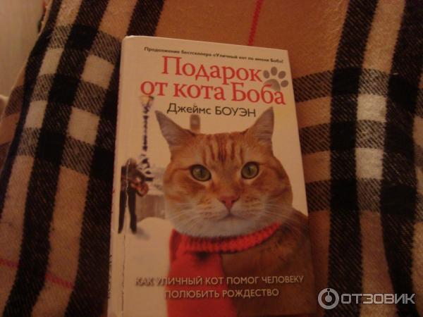 Джеймс боуэн подарок от кота боба как 233