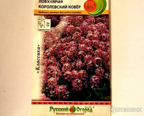 Лобулярия королевский ковёр выращивание из семян 89