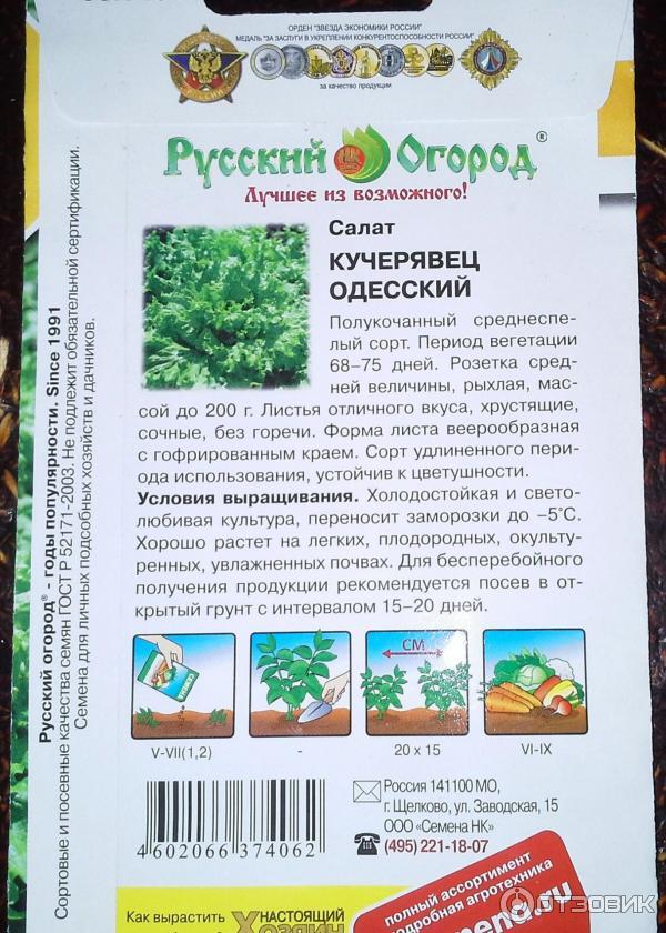 Салат кучерявец одесский выращивание из семян 65