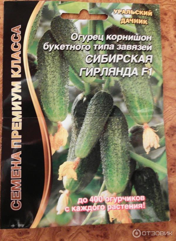 Огурец сибирская гирлянда f1 отзывы