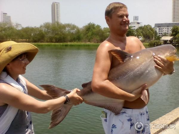 паттайя магазины рыбалки в