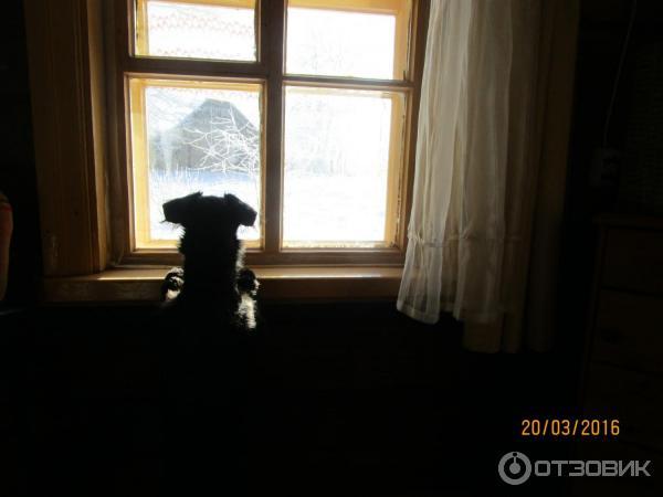 Увидел соседку в окне фото 561-562