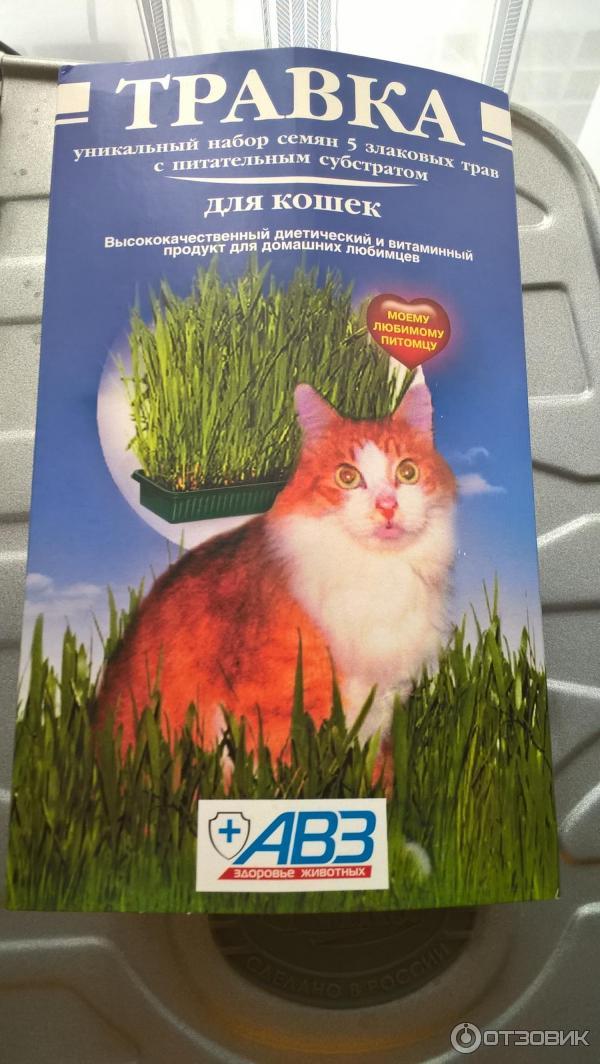 Какую траву сажают для кошек 28