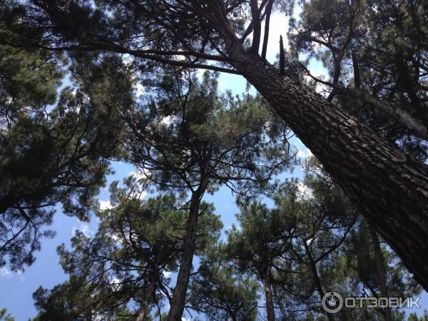 отдых в абхазии отзывы отдыхающих 2019 форум