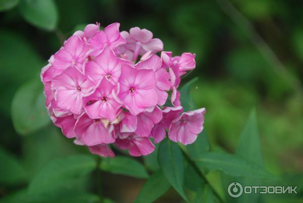 Цветы за которыми не надо ухаживать