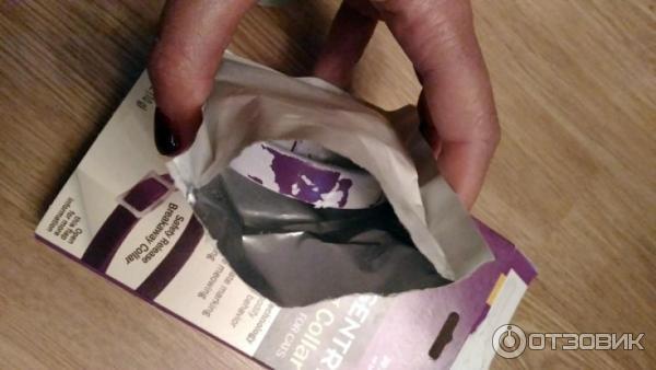 how to eliminate dog odor in carpet