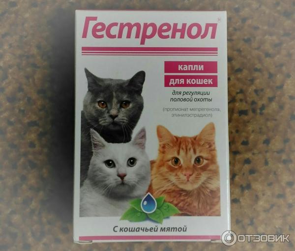 Предотвращение беременности у кошек