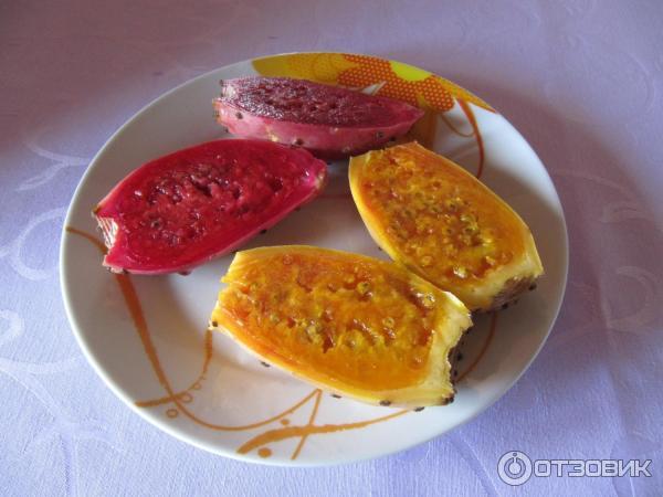 съедобные плоды кактуса фото