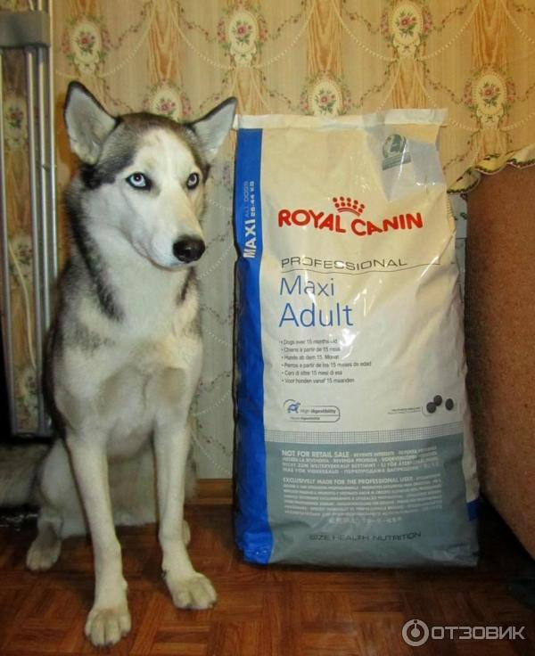 Корм royal canin professional maxi adult