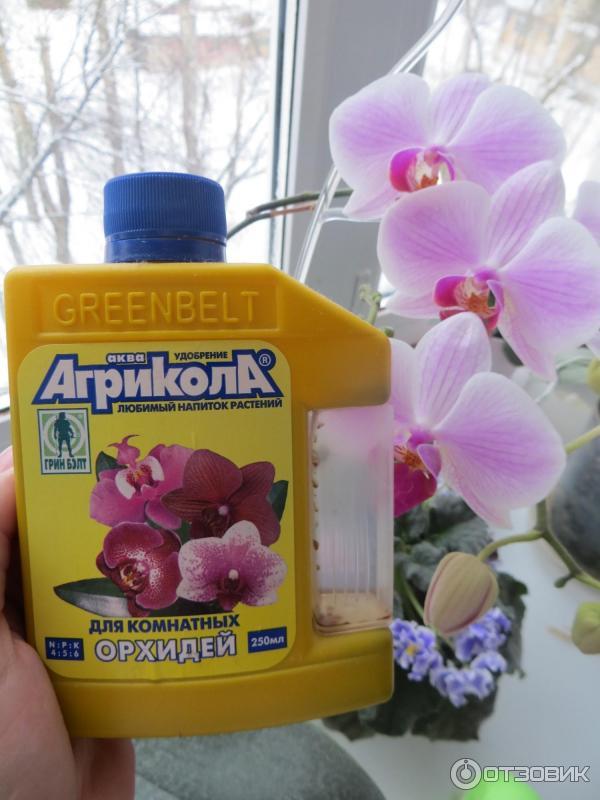 Удобрения цветам в домашних условиях 503