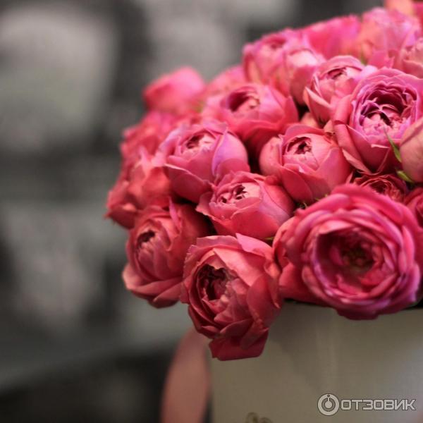 Новая голландия цветы в санкт петербурге официальный сайт