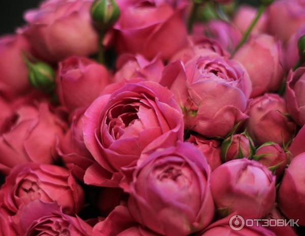 Новая голландия цветы москва