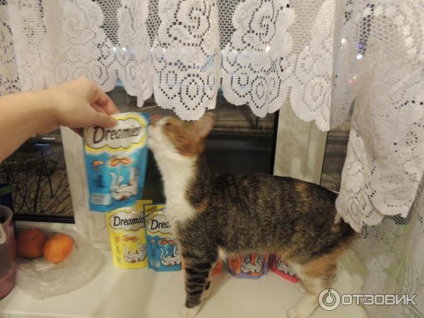Жидкий стул у котёнка чем лечить в домашних условиях