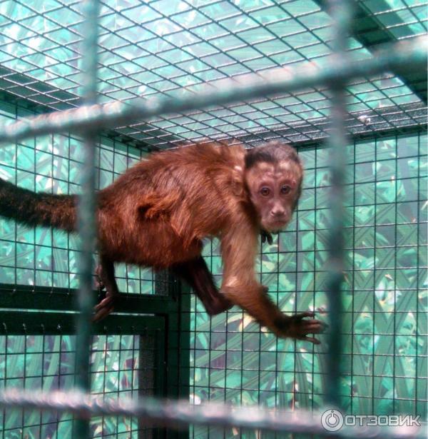 Выставка обезьян