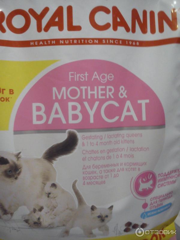 Корм для беременной кошки отзывы