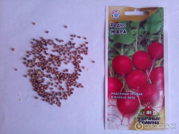 Выращивание на семена редис 432