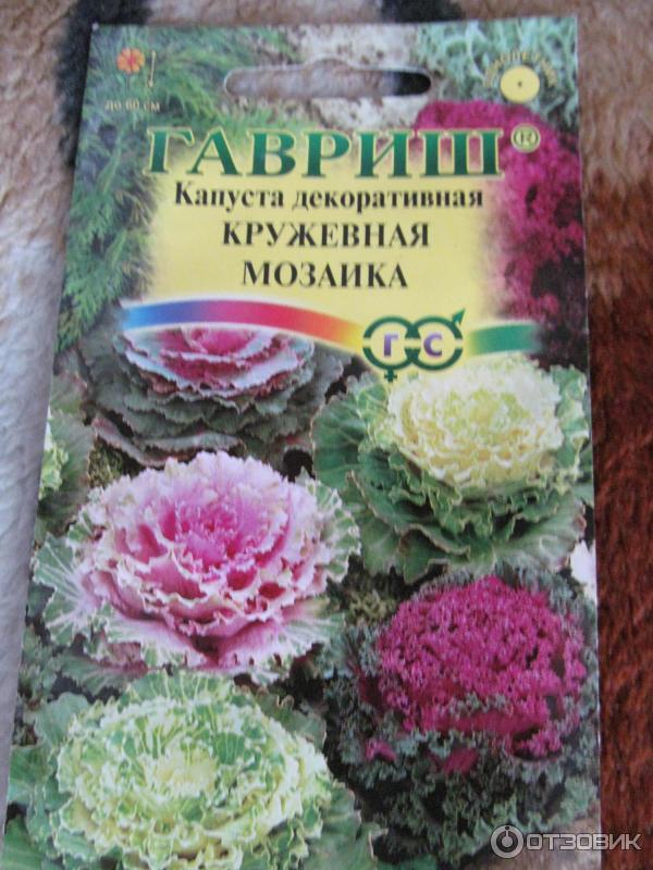 Капуста декоративный выращивание из семян 544