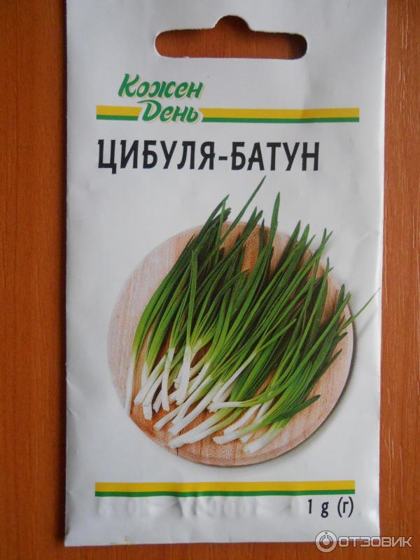 Сажаем лук-батун семенами 40