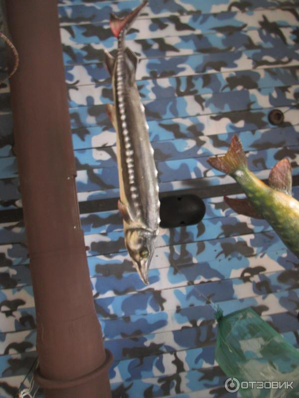 охота и рыбалка тюмень официальный сайт меню