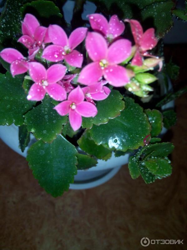 Комнатные цветы для раков
