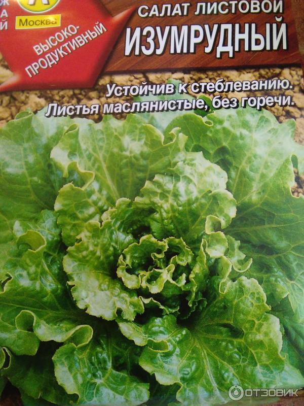 Фотографии листового салата с характеристикой