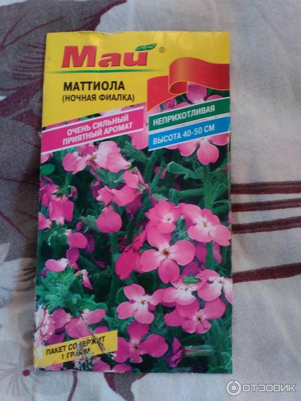 Садовые цветы ночная фиалка