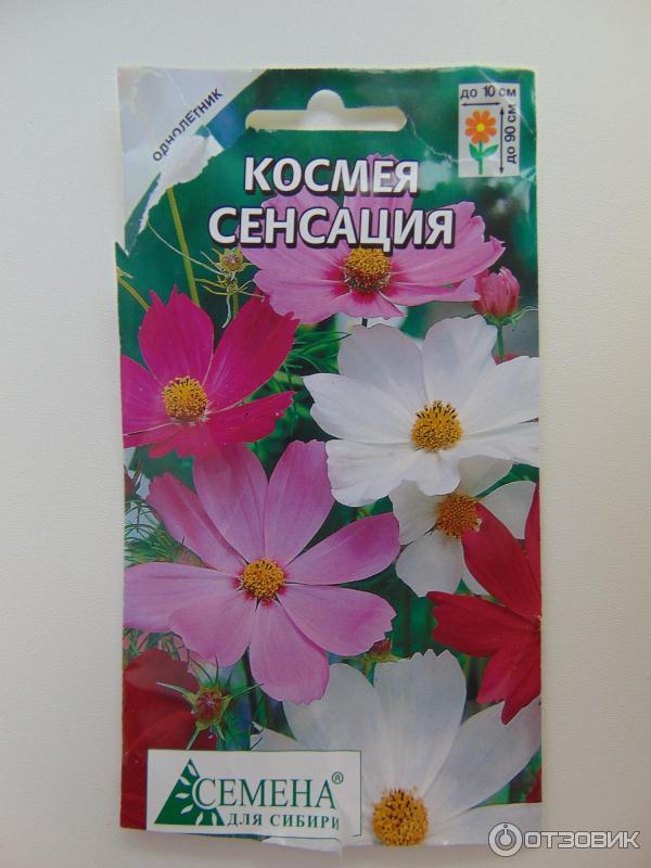семена для сибири красноярск
