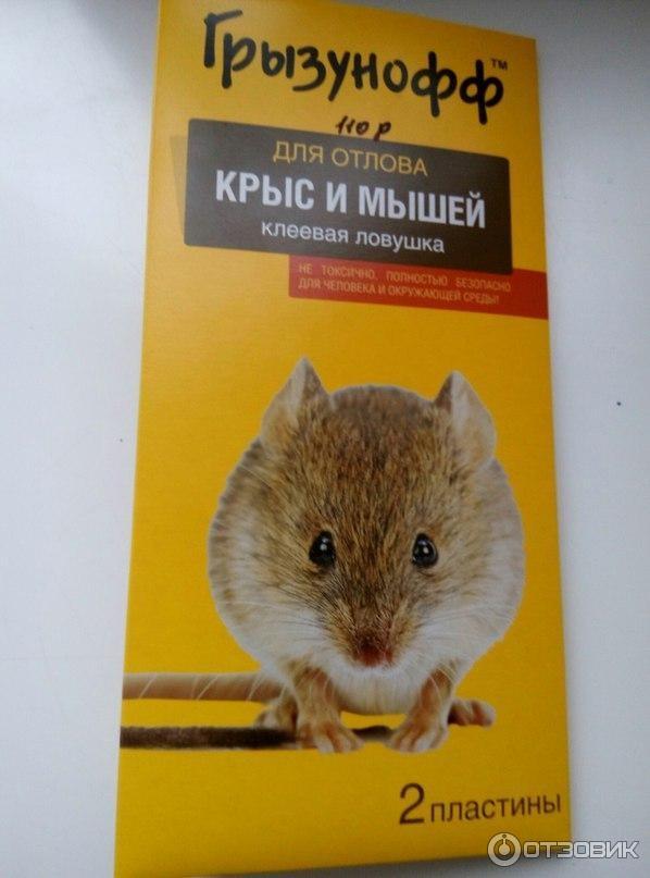 Картинки с летающими мышами нашем