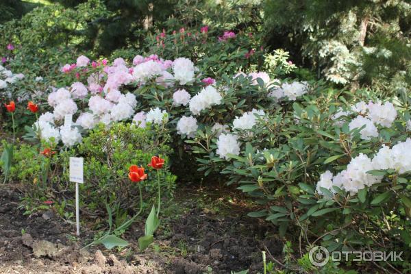 Магазин цветов при ботаническом саде на ботанике екатеринбург, осенний букет составление слов