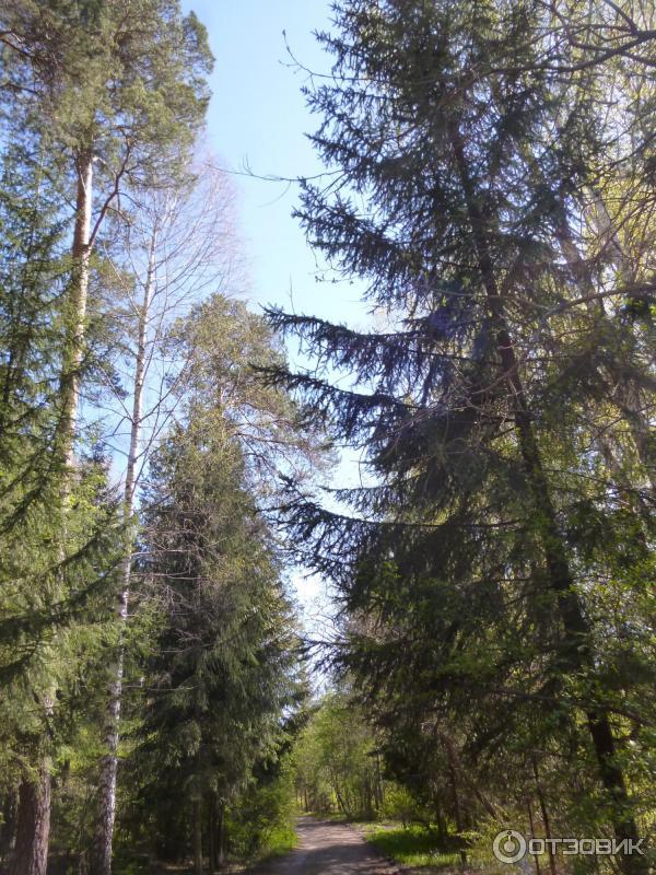 Парк лесоводов россии екатеринбург фото