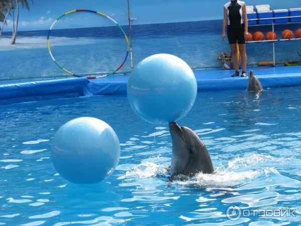говорить общественном дельфинарий ялта фото юношеские годы