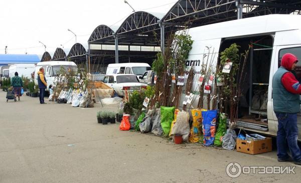 Где находится оптовый рынок цветов в краснодаре на восточно-кругликовской, цветы
