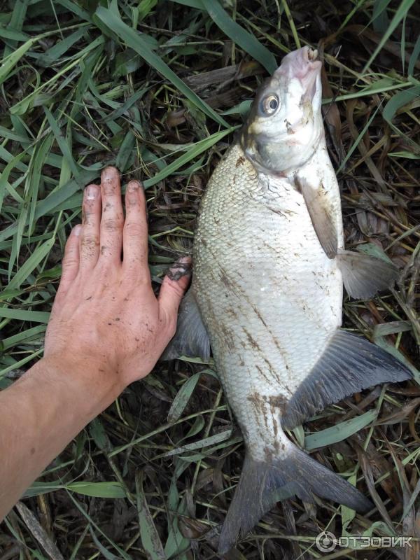 хорошее что фото рыбы реки днепр касается