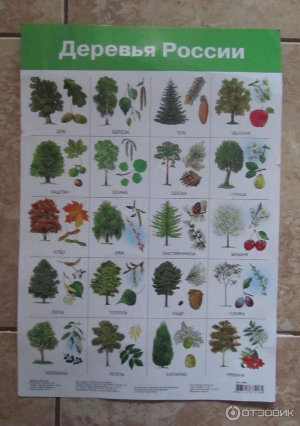 дачу дерево и лист фото с названием которое готовится практически