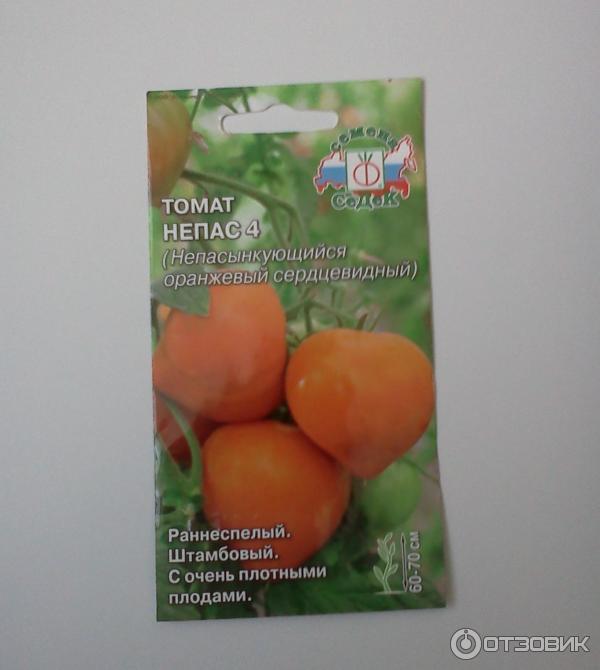 томат клубничное дерево отзывы фото урожайность