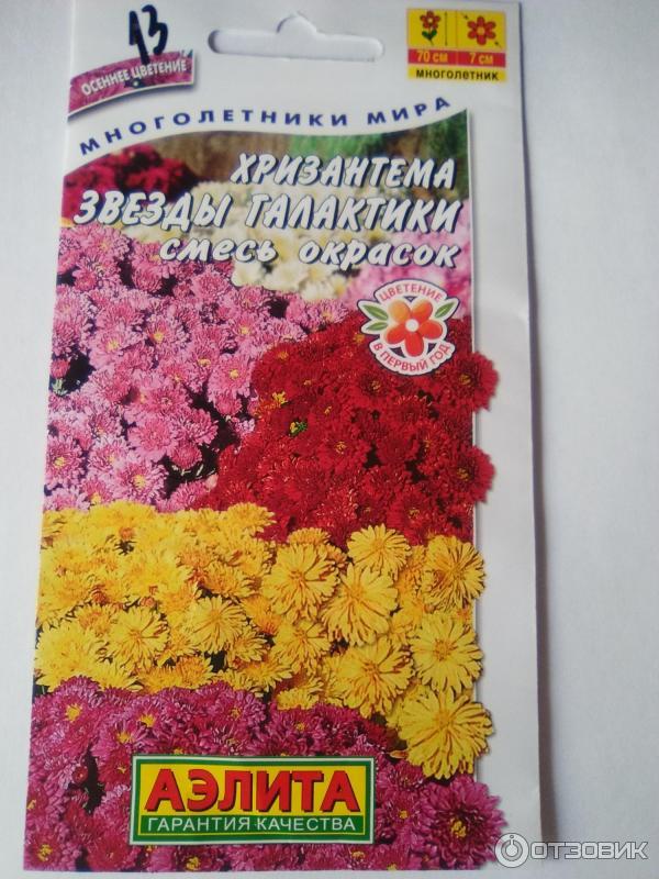 дополним наш фото семена хризантем богатый город