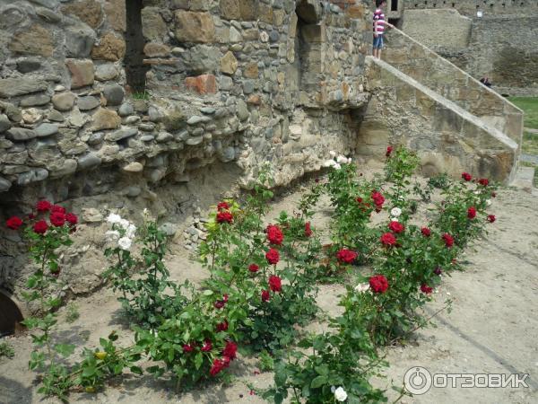 цветочки на территории Светицховели