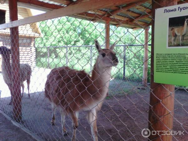 продажи страусиная ферма курган официальный сайт фото развилась